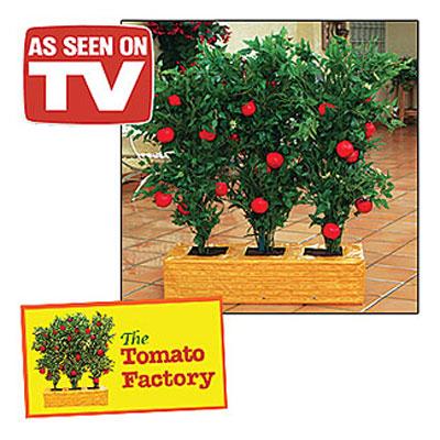 Tomato Factory